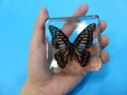 「昆虫・クモのアクリル封入標本」を授業で使っていただきました!